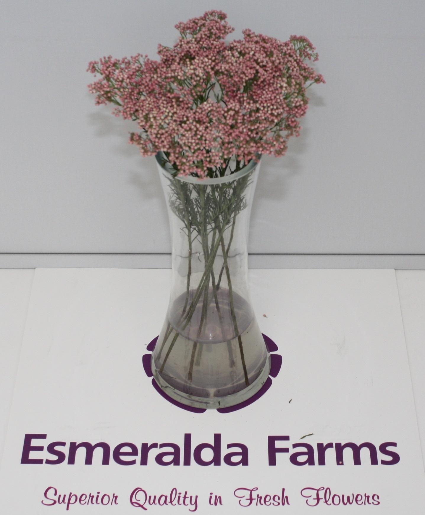 Meet our partner esmeralda farms world class mightylinksfo